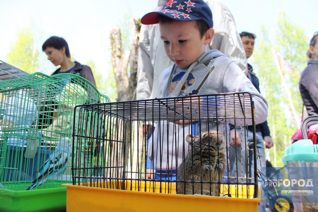 Кировский парк Сыктывкара в День города превратился в экоплощадку, фото-3