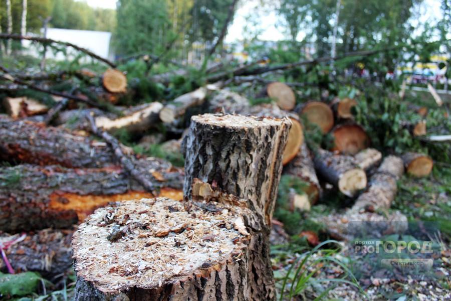 Сыктывкарцы возмущены: в Мичуринском парке вырубают вековые деревья,  фоторепортаж, 6 сентября 2017   Новости Сыктывкара   Про Город Сыктывкар