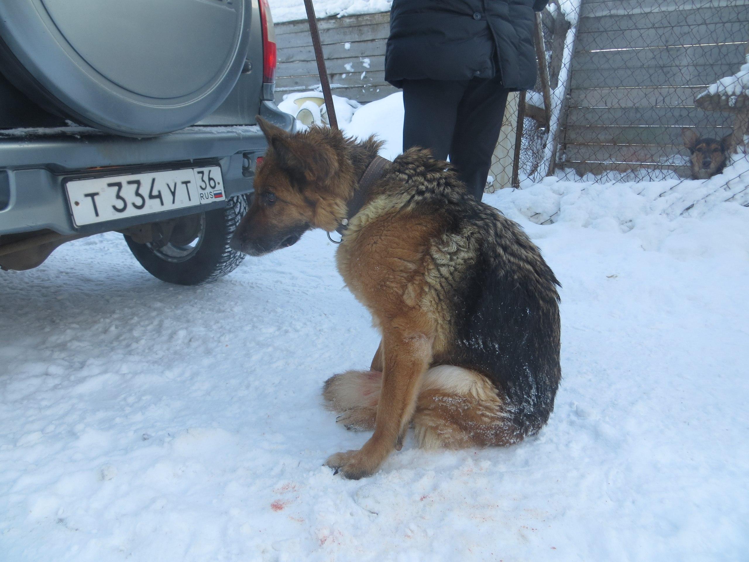 Что делать, если сбил собаку на машине, по законодательству