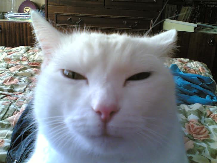 Картинки по запросу кот подозревака