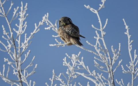 Погода в Сыктывкаре на 26 февраля: куда еще холоднее?