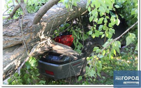 В Сыктывкаре дерево упало на дорогой внедорожник (фото)