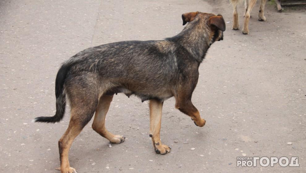 Дрочит у пса