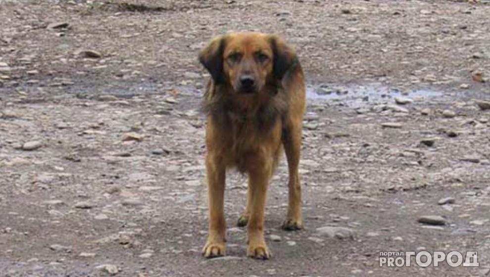 Жители Коми написали петицию против жестокого уничтожения бездомных животных