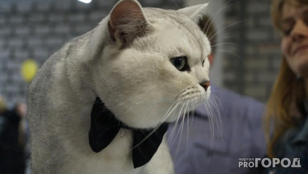 С 5 июня всех домашних животных должны зарегистрировать в Минсельхозе Коми