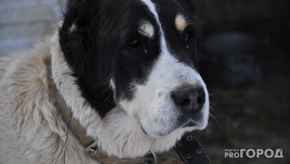 Жителям Коми не придется регистрировать домашних кошек и собак
