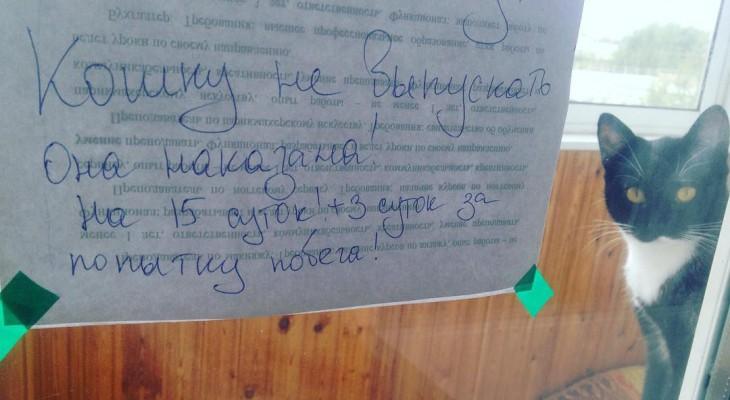 Сыктывкарское утро 3 сентября в Instagram:  наказанная кошка и маленький супермен