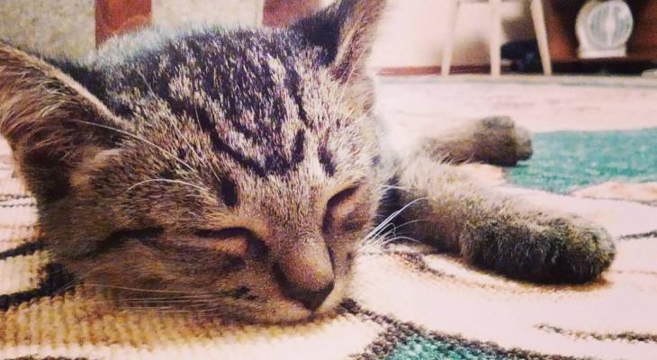 Сыктывкарское утро 25 сентября в Instagram: «Кросс нации» и сонные киски