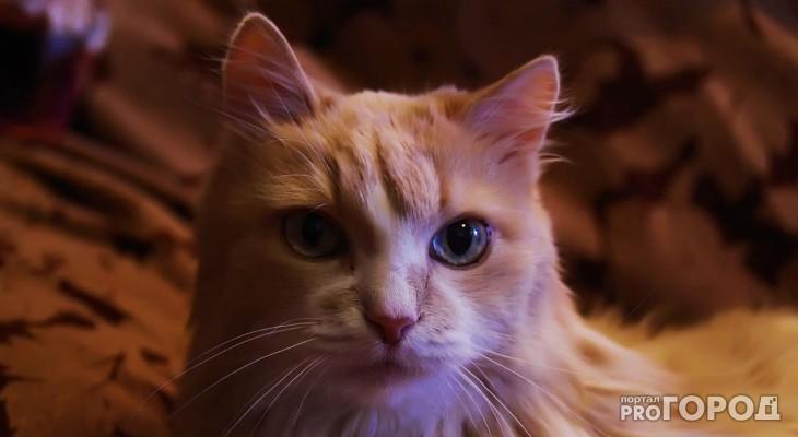 В конкурсе милых котиков «Котофото» 8 новых участников