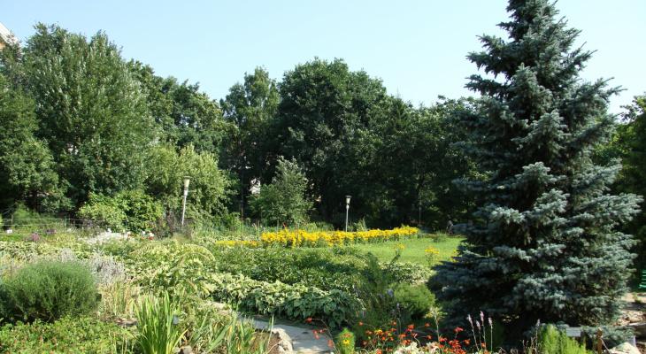 Погода на 9 июня: в Сыктывкар пришло лето