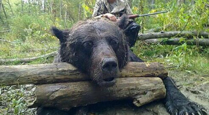 Жители Коми в панике: в сети распространяется информация о медведе-убийце