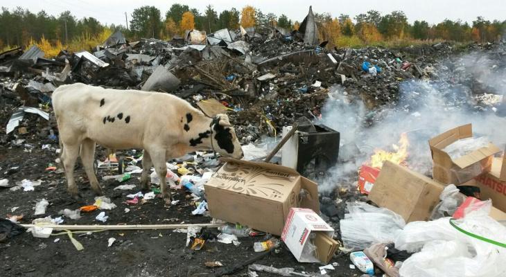 Апокалиптичное фото: в Коми животные пасутся на свалках среди полыхающего мусора (фото)