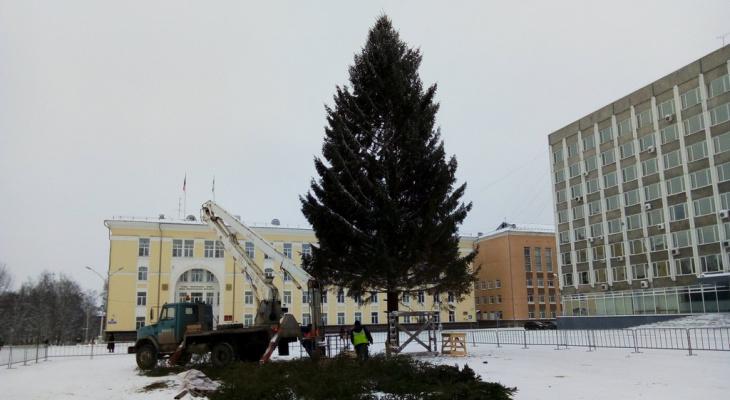 Стало известно, какая необычная судьба ждет главную новогоднюю елку Коми