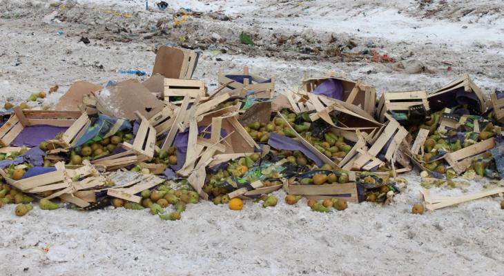 В Сыктывкаре раздавили бульдозером 700 килограммов «санкционных» фруктов