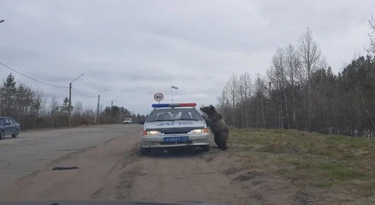 В Коми медведь ломился в автомобиль ДПС (видео)