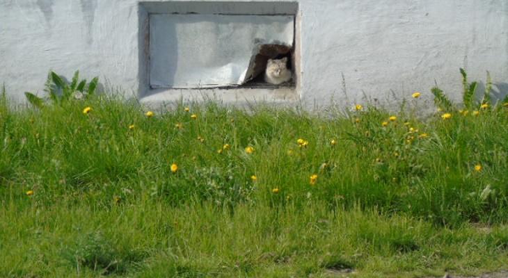 В Коми бездомных кошек заживо замуровали в подвале