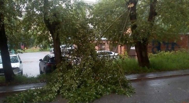 В Сыктывкаре дорогую машину повредила огромная ветка