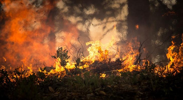 За сутки в Коми произошло сразу шесть лесных пожаров