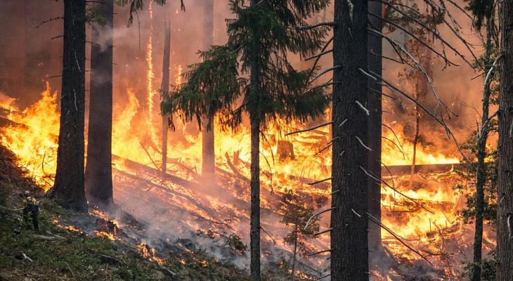 В Коми объявили о чрезвычайно высокой пожароопасной обстановке