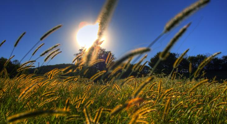 Погода в Сыктывкаре 27 августа: жарко и солнечно
