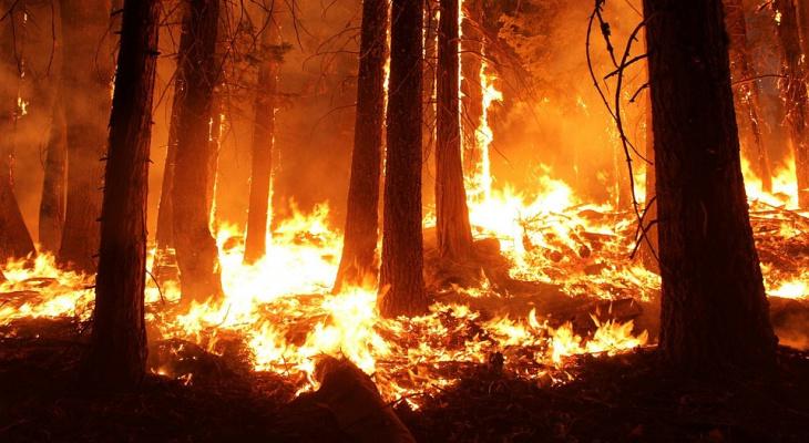 В Республику Коми вернулись лесные пожары