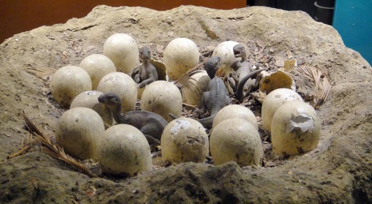 В заброшенном карьере под Сыктывкаром обнаружили яйцо динозавра