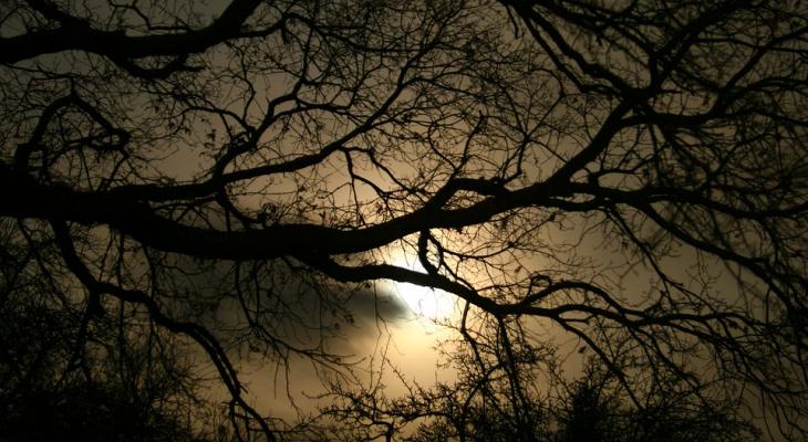 Погода в Сыктывкаре 20 сентября: предельно холодная ночь и почти ясный день