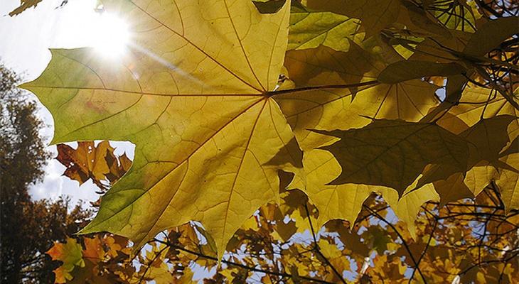 Погода в Сыктывкаре 13 октября: солнечно, но холодно