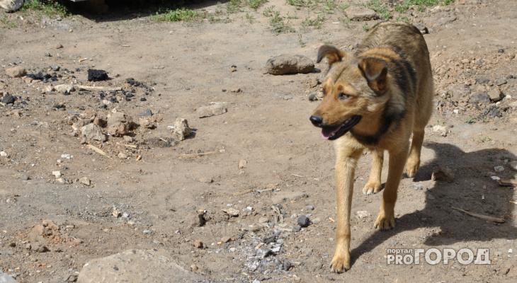 Сыктывкарцы о собаке, которую морят голодом: «Хозяев самих посадить на цепь»