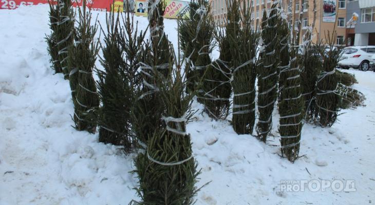 Стало известно, сколько елок срубили жители Коми к Новому году