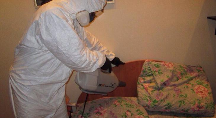 Охотники за тараканами: в Сыктывкаре есть служба, которая уничтожает насекомых, грызунов и дезинфицирует квартиры