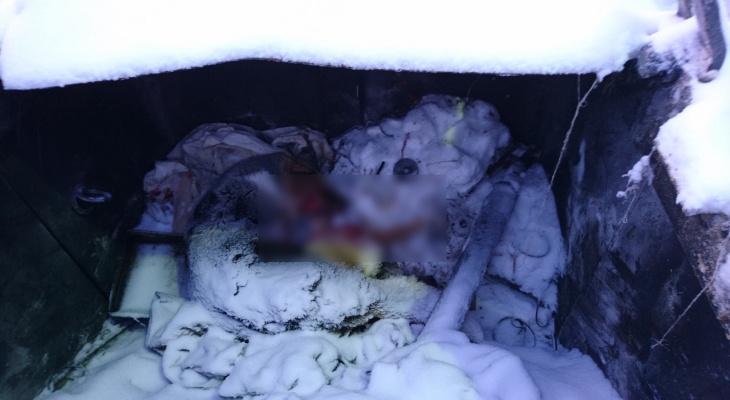 В мусорном контейнере на предприятии в Коми обнаружили труп собаки (фото)