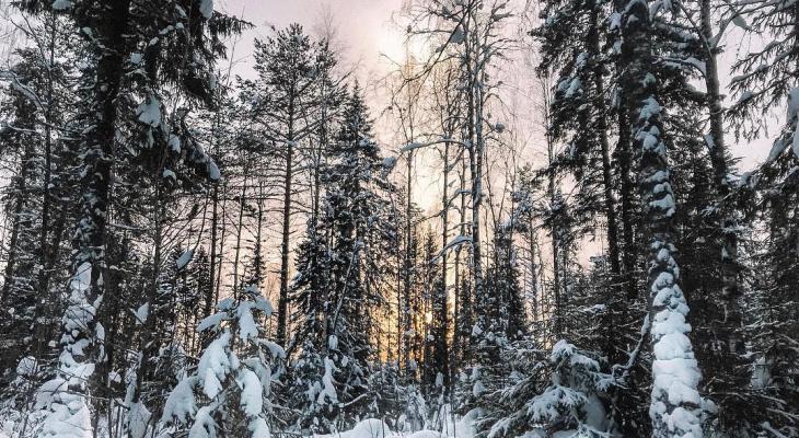 Фото дня от сыктывкарки: зимняя сказка в заснеженном лесу