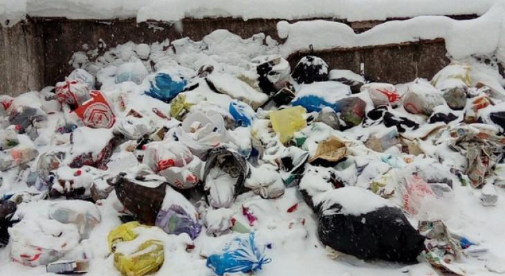 Мусорная эпопея: сыктывкарский двор две недели не могли избавить от мешков с помоями