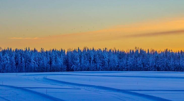 Фото дня от сыктывкарца: еловый лес на закате