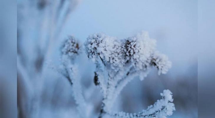 Фото дня: морозные узоры на ветках в сыктывкарском лесу
