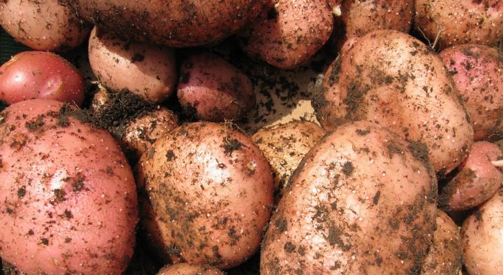 Сыктывкарец украл четыре мешка картошки, но оставил на сугробе отпечаток номера авто