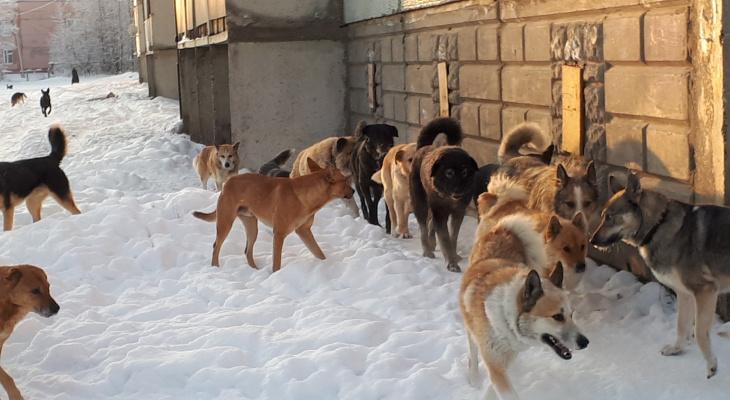 В Коми предложили выдавать паспорта на собак