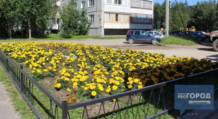 Погода в Сыктывкаре на 12 мая: летняя жара не отступает