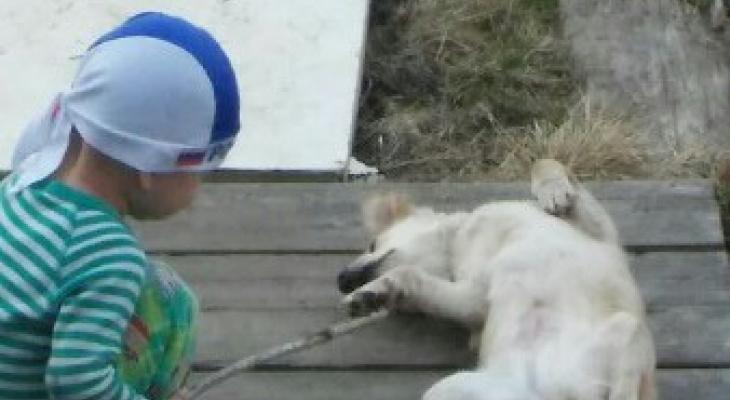 «Страшный визг до сих пор в ушах»: сыктывкарка рассказала, как у ее дома волки загрызли собаку