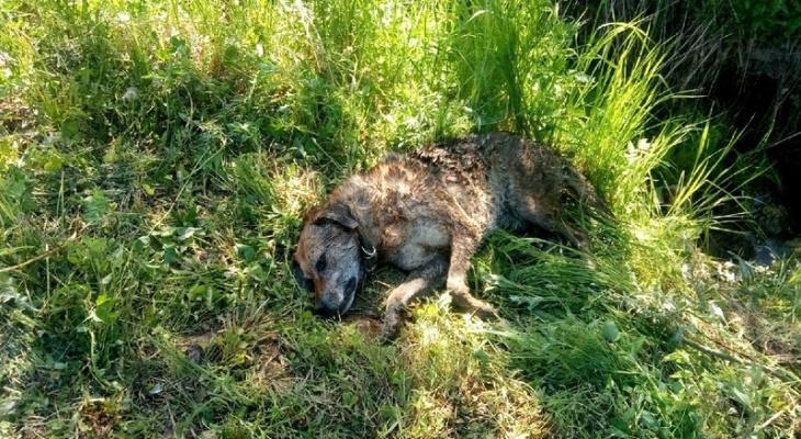 Сыктывкарцы о мужчине, который убил пса при детях: «В следующий раз человека пристрелит»
