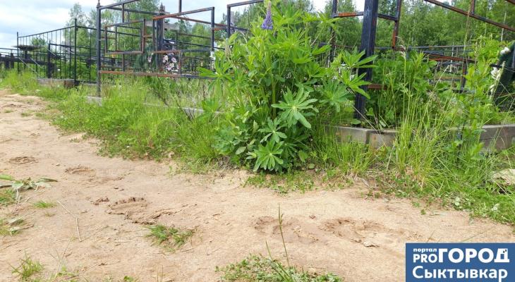В Коми заметили следы медведя, который облюбовал городское кладбище (фото)