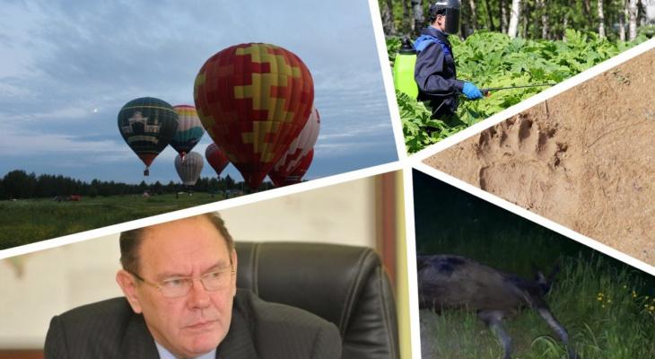 Итоги недели в Коми: медведь на кладбище, лось на трассе и «Живой воздух»