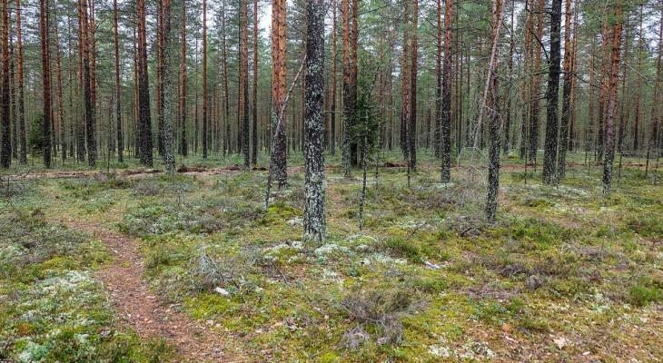 Под Сыктывкаром вырубят тысячи «квадратов» леса