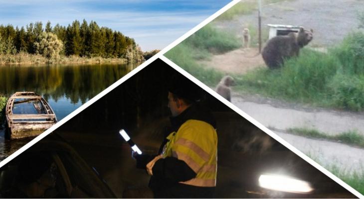 Итоги недели в Коми: ДТП, трагедии на реках и бесчинства медведей