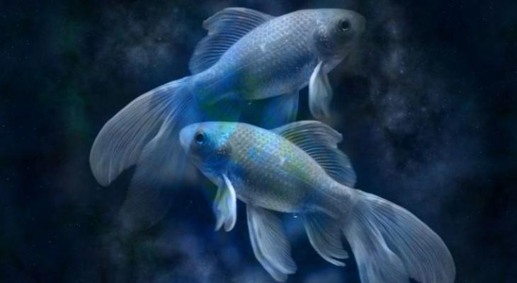 Гороскоп на 15 августа: Рыбам пора начать важное дело, а Овнам - не быть эгоистами
