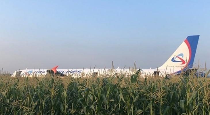 В России пассажирский самолет без двигателей и шасси сел на кукурузное поле (фото, видео)