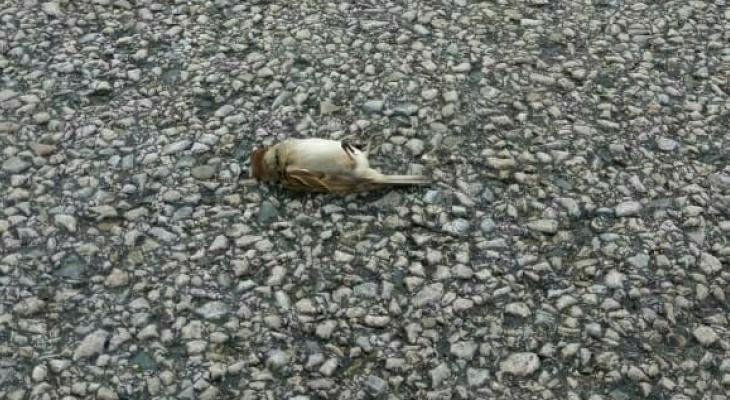 Жители Коми о стае мертвых птиц в одном из районов: «Знамение апокалипсиса»