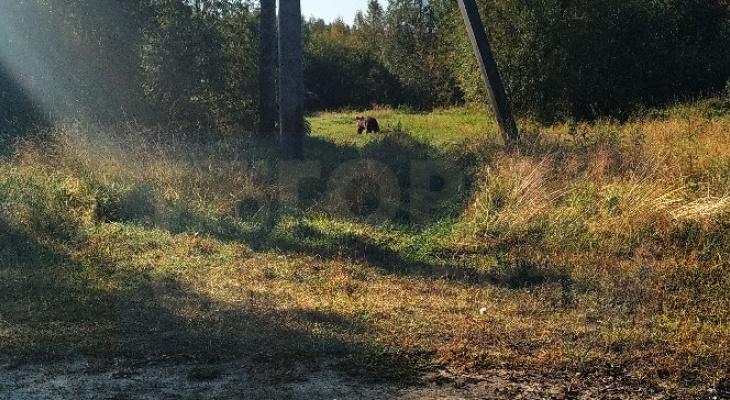 Сыктывкарцев предупредили о медведе в поселке (фото)
