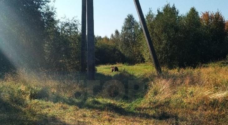 В полиции рассказали, что будут делать с медведем, которого встретил сыктывкарец